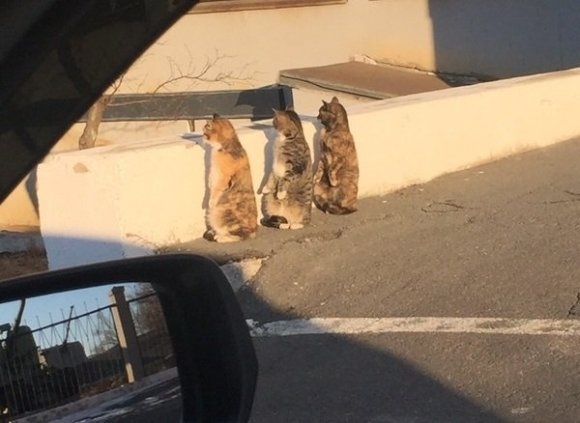 staring cats 01