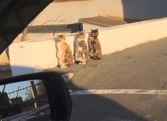 staring cats 02