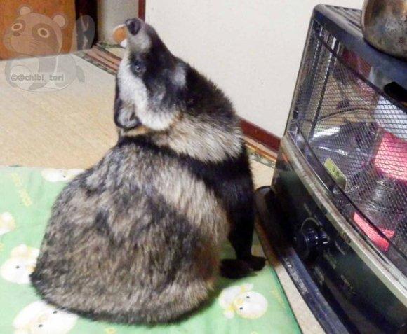 tanuki stove 04