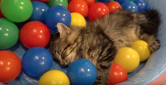 10catsballs3