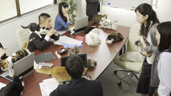 cat office 06