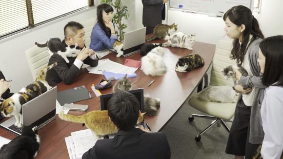 cat office 06