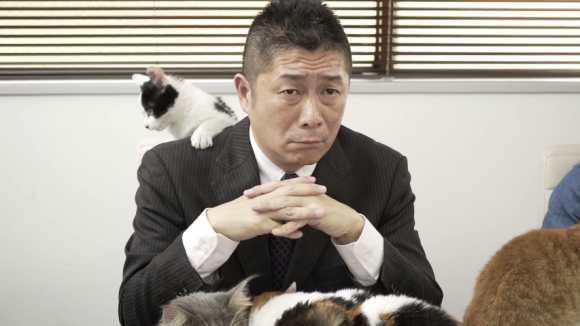 cat office 07