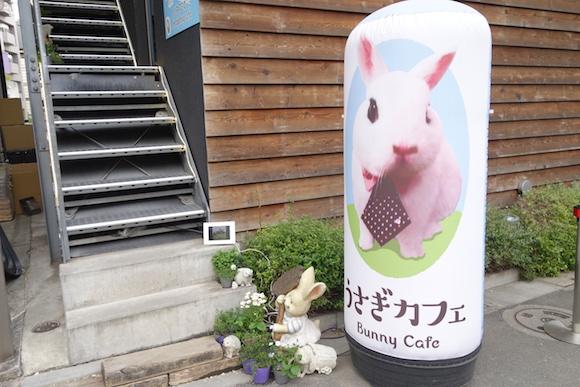 Hedgehog Cafe1