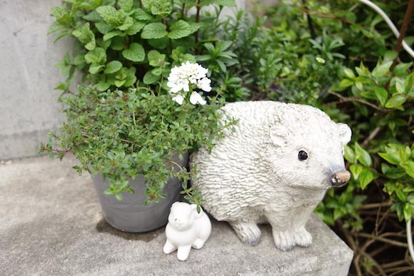 Hedgehog Cafe4