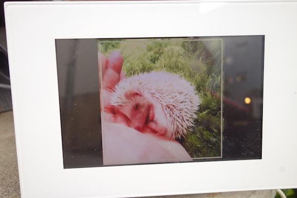 Hedgehog Cafe5