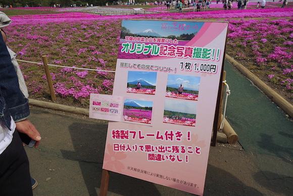 Shibazakura0173