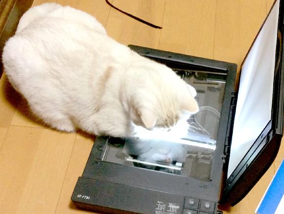 Cat Scan 3
