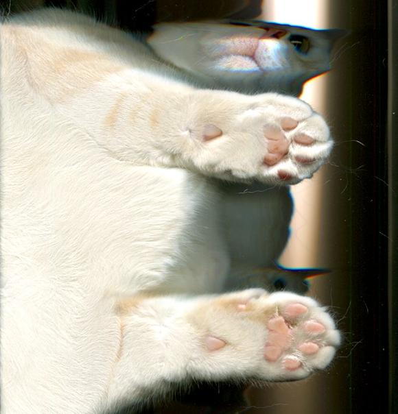 Cat Scan 5