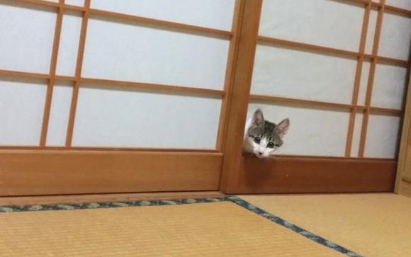 Kitty Screen