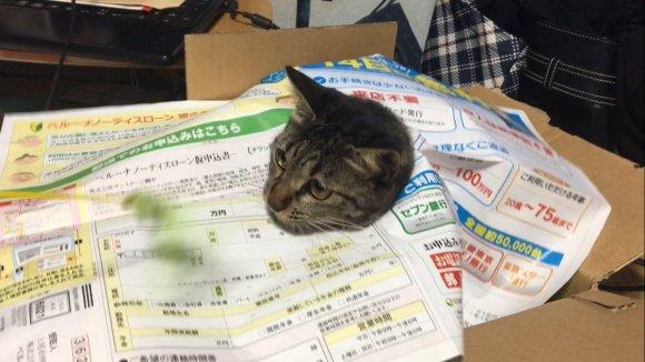cat-newspaper-2