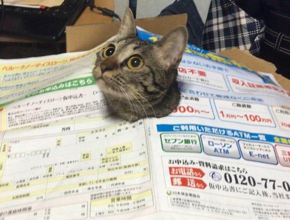 cat-newspaper-4