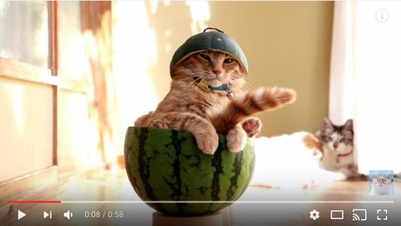 chill-cat