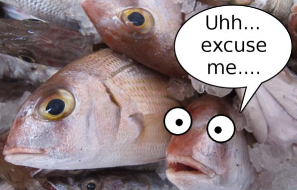 fish-top