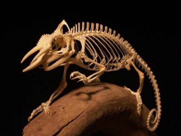 kfc-bones-5
