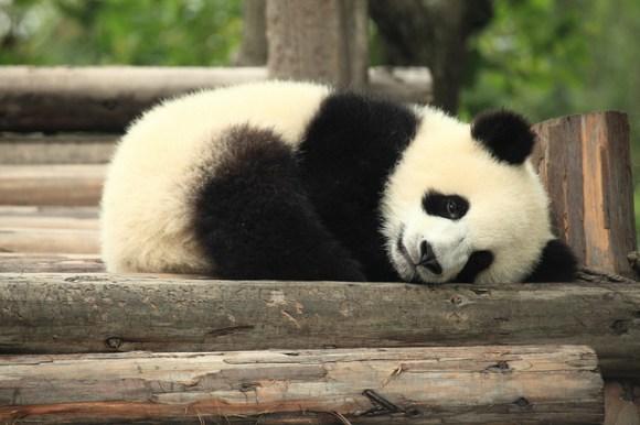 panda-bread-04