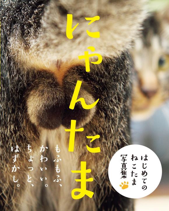 cat-balls-3
