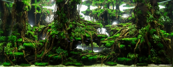 Competitive Aquatic Plant Designs Look More Like Gorgeous Jungles Than Fish Tanks Soranews24 Japan News