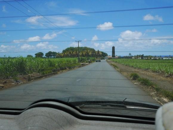 モーリシャスサトウキビ畑