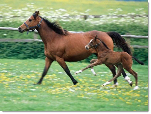 mother-baby-horse