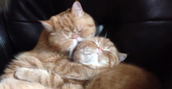 brotherhoodcat1