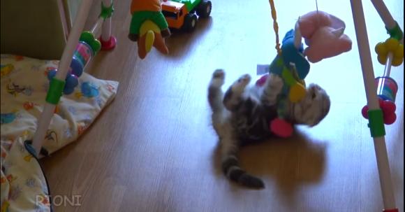 playmerrycat1