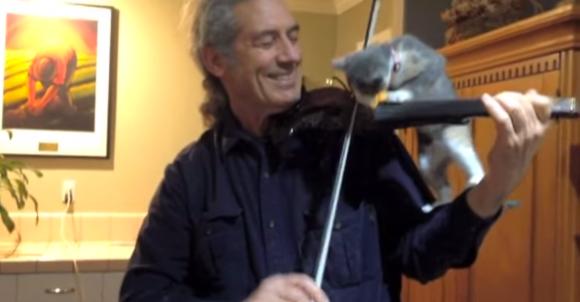 violincat1