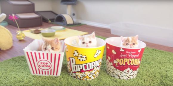 popcornkitten1