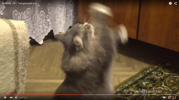 dancingcatsan1