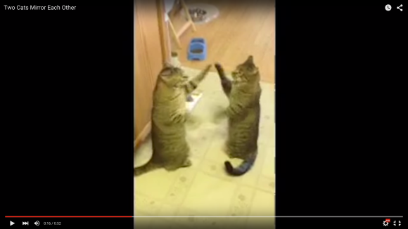 mirrorcats1