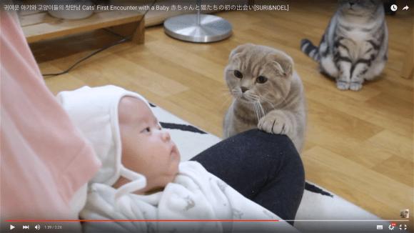 babyand cats1