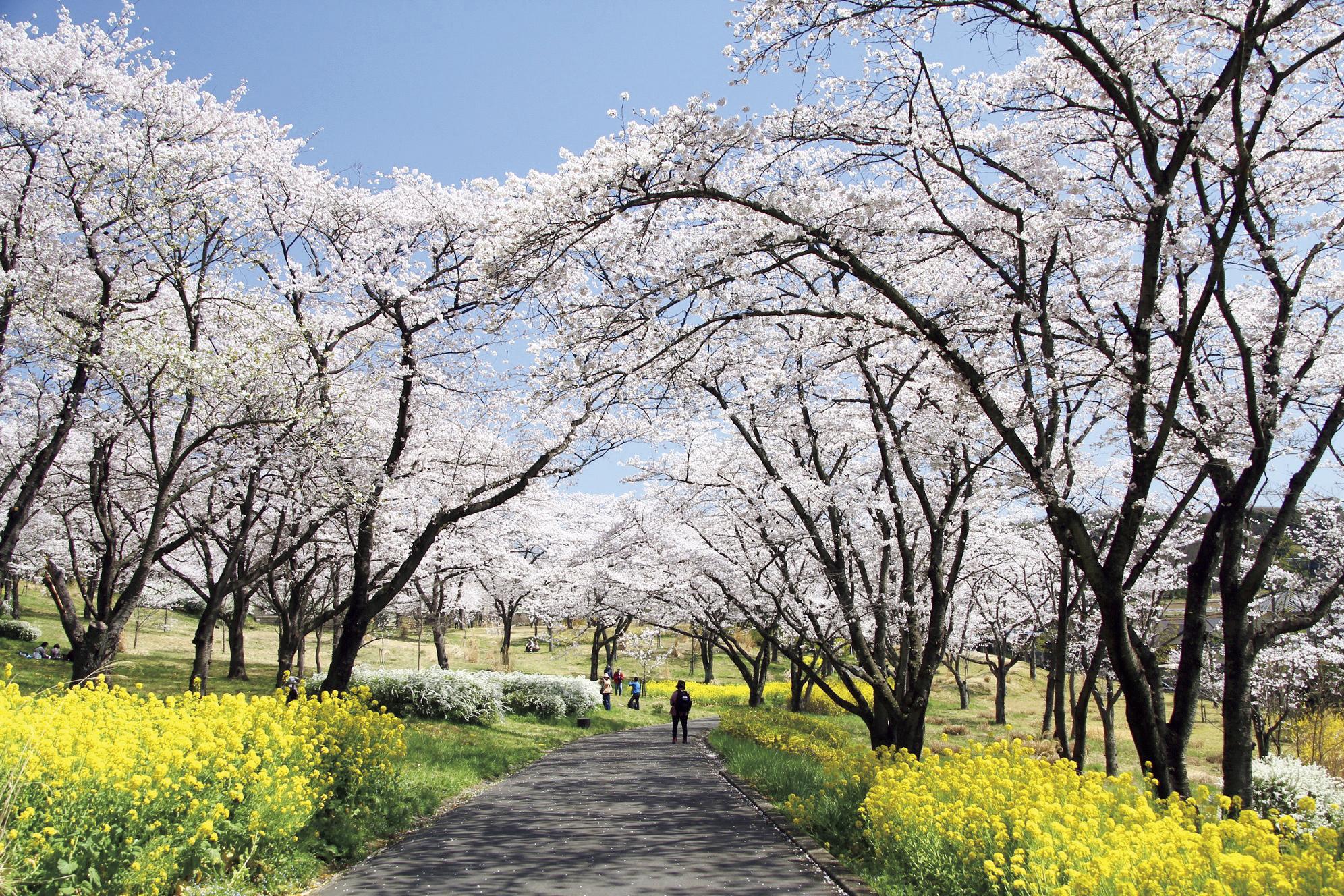 国際武蔵丘陵森林公園 野外炊飯広場